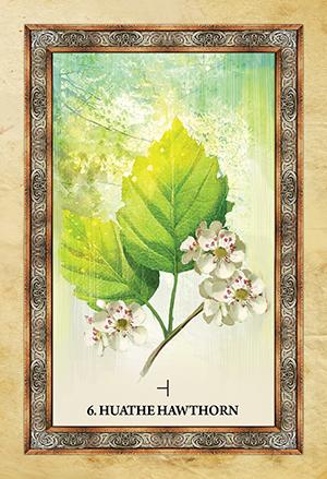Celtic Tree Oracle Hawthorn Card