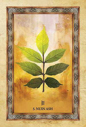 Celtic Tree Oracle Ash Card