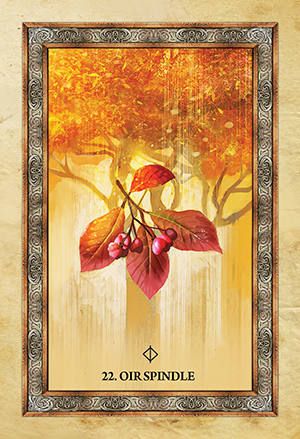 Celtic Tree Oracle Spindle Card